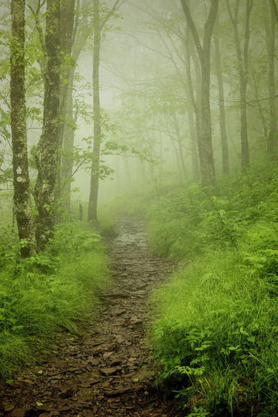 Wall Art - Photograph - Pilgrims Pathway - Craggy Gardens Trail by Stephen Stookey
