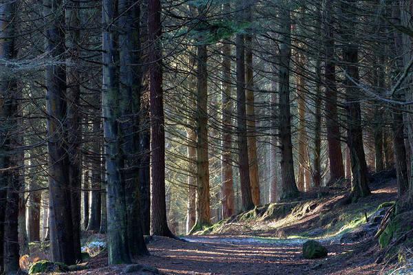 Photograph - Craig Dunain - Forest In Winter Light by Karen Van Der Zijden