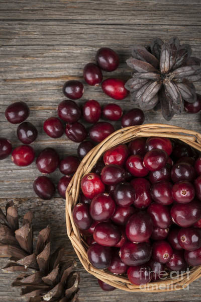 Wall Art - Photograph - Cranberries In Basket by Elena Elisseeva