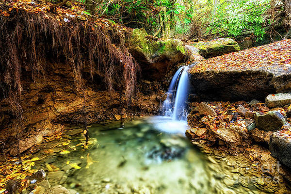 Trout Stream Photograph - Cranberry Wilderness Plunge Pool by Thomas R Fletcher
