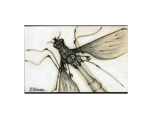 Alonzo Drawing - Crane Fly by Jesse Alonzo