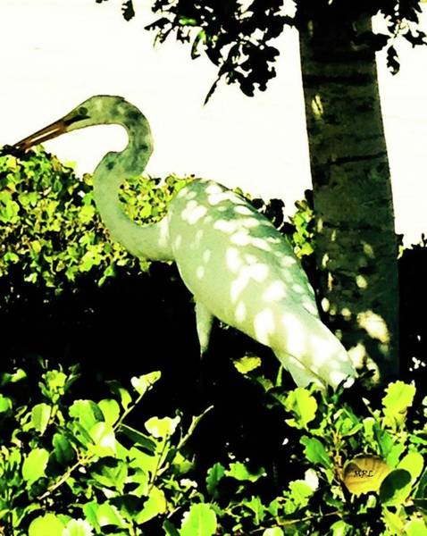 Photograph - Crane In Need Of Shade by Marian Palucci-Lonzetta