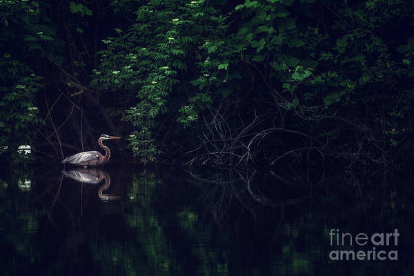 Photograph - Crane by Tim Wemple
