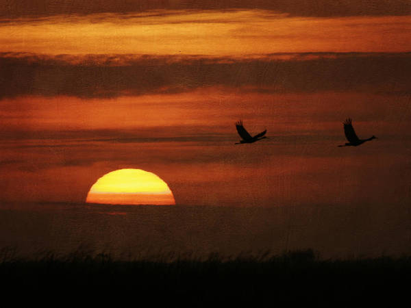 Photograph - Cranes Away by Charles McKelroy