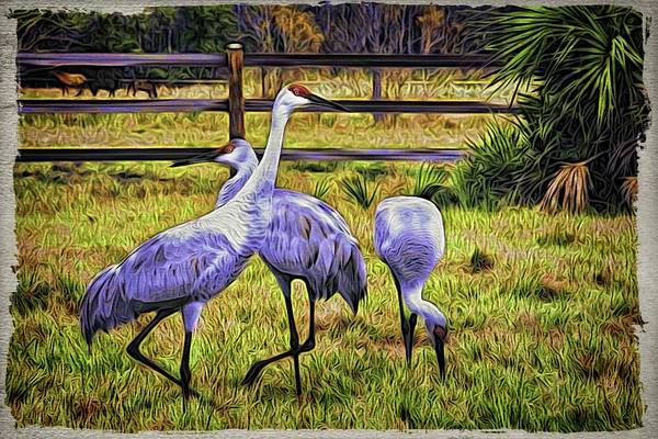 Photograph - Cranes In The Pasture by Alice Gipson