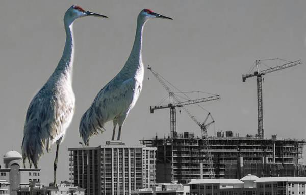 Photograph - Cranes Reign by Richard Goldman