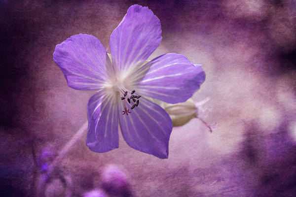 Photograph - Cranesbill by Clare Bambers