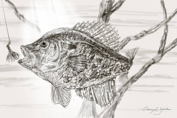 Drawing - Crappie Time by Barry Jones