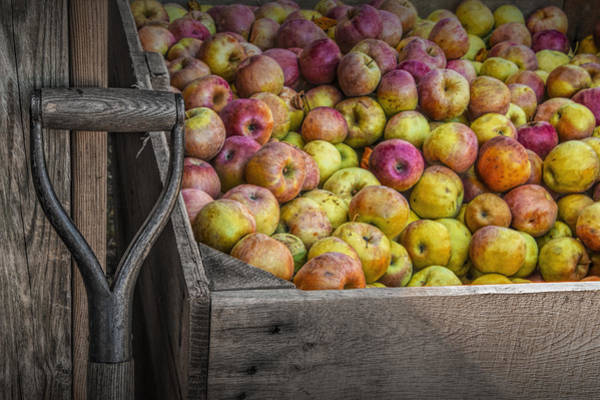 Photograph - Crated Apples At The Cider Press by Randall Nyhof