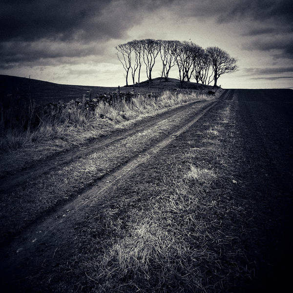 Photograph - Crawton Trees by Dave Bowman