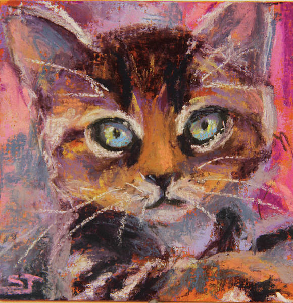 Painting - Crazy Cat Tabby  by Susan Jenkins