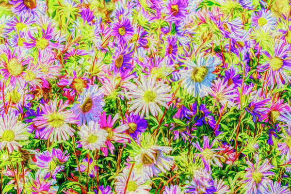 Photograph - Crazy Daisies by Wes and Dotty Weber