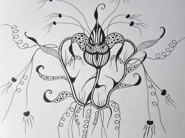 Drawing - Crazy  by Rosita Larsson