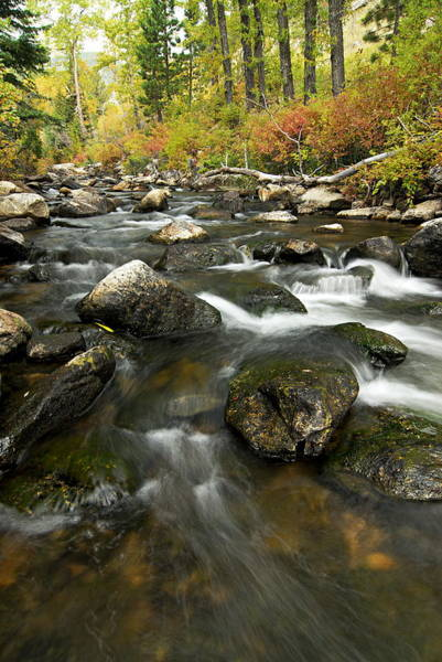 Photograph - Crazy Woman Creek In Autumn by Larry Ricker