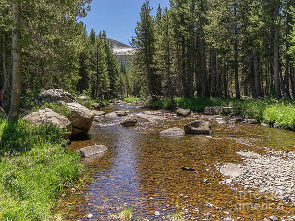 Photograph - Creek Along Tioga Pass Yosemite California Dsc04303 by Wingsdomain Art and Photography