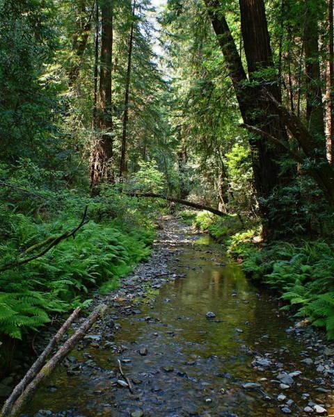 Photograph - Creek At Muir Woods Near Mt Tamalpais by Ben Upham III