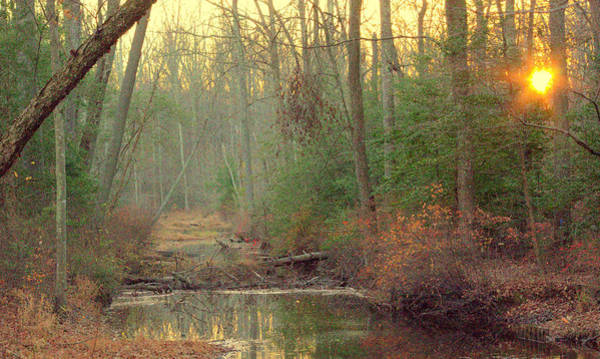 Photograph - Creek Bed by Buddy Scott