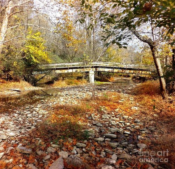 Photograph - Creek Bed by David Neace