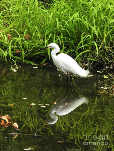 Photograph - Creek Birds by Leslie Hunziker