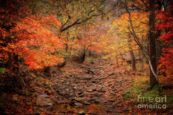 Photograph - Creek Bottom Color by Larry McMahon