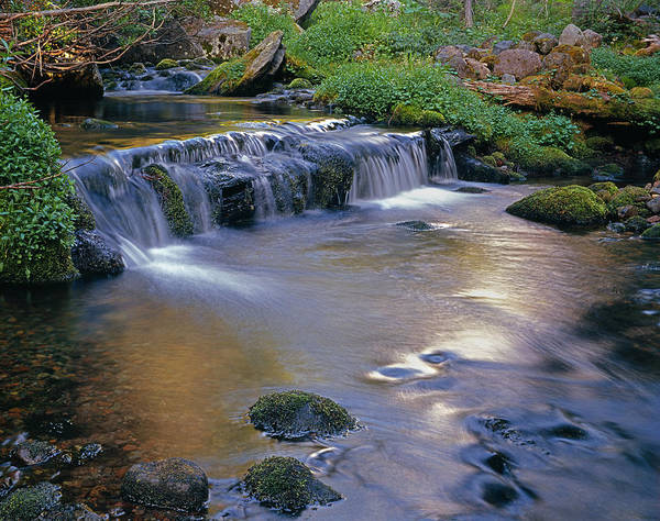 Photograph - 2m4865-creek Near Moraine Park Trail  by Ed  Cooper Photography