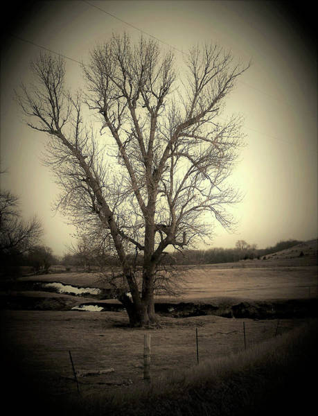 Wall Art - Photograph - Creek Tree by Toni Grote