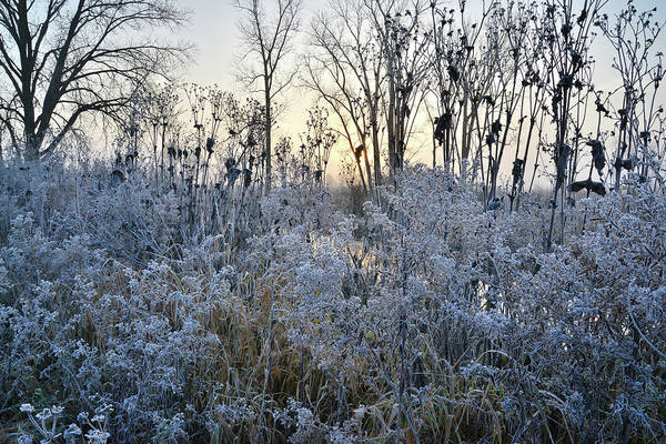Photograph - Creekside Frost In Glacial Park by Ray Mathis