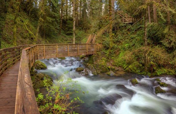 Photograph - Creekside Walk by Jon Ares