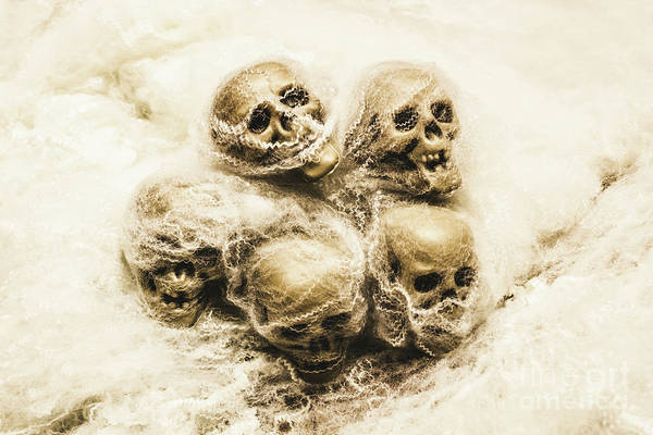 Bone Photograph - Creepy Skulls Covered In Spiderwebs by Jorgo Photography - Wall Art Gallery