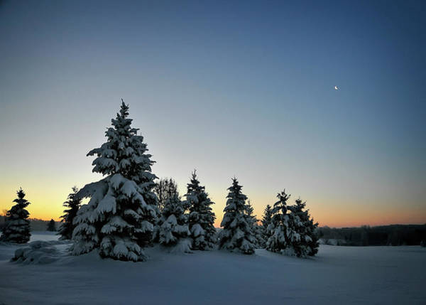 Photograph - Crescent Dawn by Jill Love