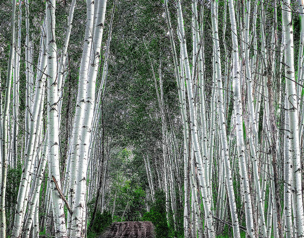 Photograph - Crested Butte Stalwarts by Scott Cordell