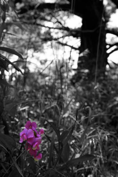 Photograph - Crimson Base by Dylan Punke
