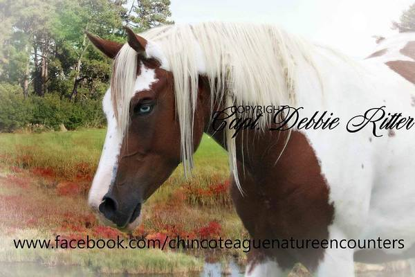 Photograph - Crimson Fall For Story Book by Captain Debbie Ritter