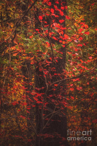 Photograph - Crimson Fall by Larry McMahon