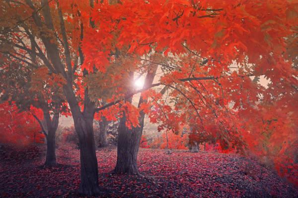 Photograph - Crimson Leaves In The Mist by Tara Turner