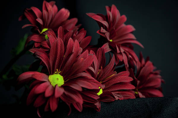 Photograph - Crimson Lime by Eric Christopher Jackson