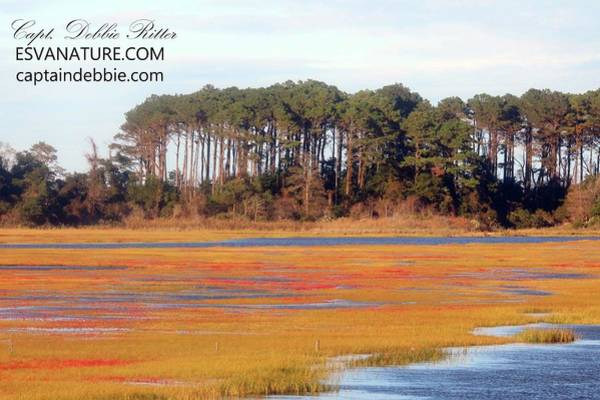Photograph - Crimson Marsh 11 by Captain Debbie Ritter