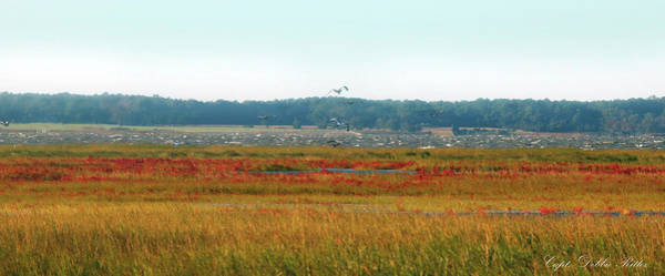 Photograph - Crimson Marsh 2 by Captain Debbie Ritter