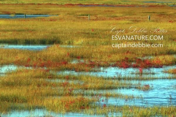 Photograph - Crimson Marsh 4 by Captain Debbie Ritter