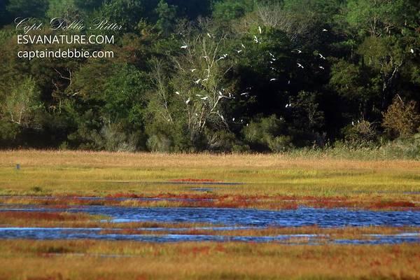 Photograph - Crimson Marsh 5 by Captain Debbie Ritter
