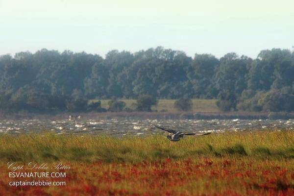 Photograph - Crimson Marsh by Captain Debbie Ritter