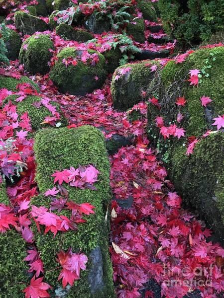 Photograph - Crimson Path by Charlene Mitchell