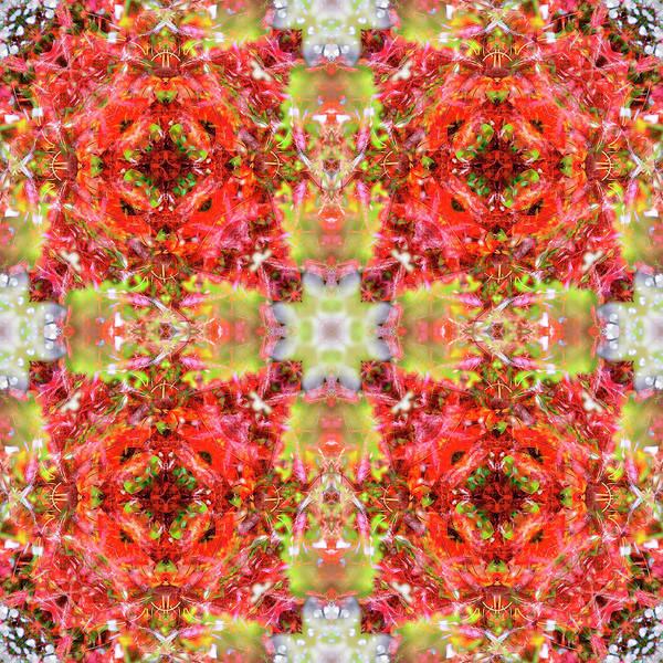 Digital Art - Crimson Quartet by Frans Blok