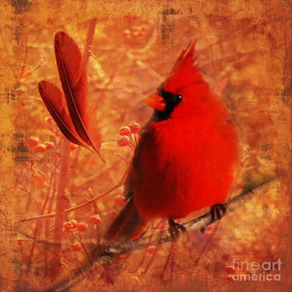 Crimson Splash 2015 Art Print
