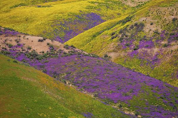 Photograph - Criss Crossed Colors On The Carrizo by Lynn Bauer