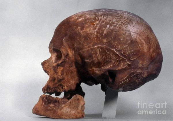 Photograph - Cro-magnon Skull by Granger