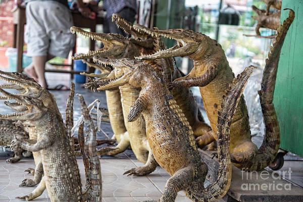 Elton John Photograph - Crocodiles Rock  by Chuck Kuhn