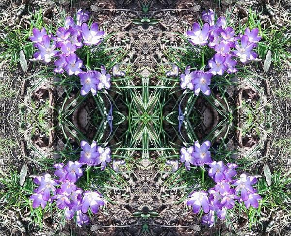 Photograph - Crocus Mandala 1 by Julia Woodman