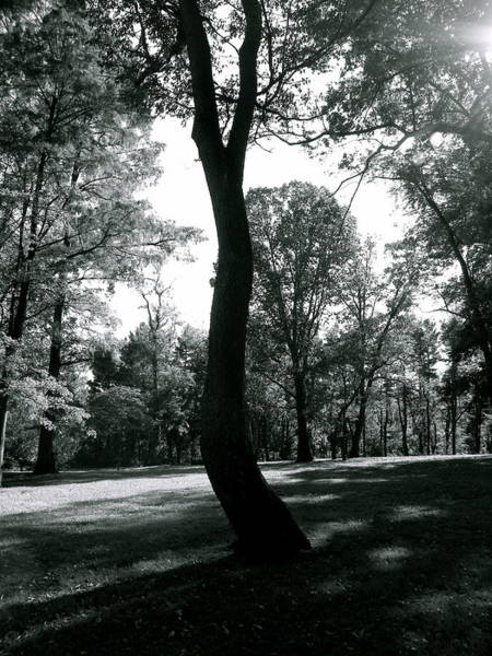 Bradley Smith Photograph - Crooked Tree by Bradley Smith