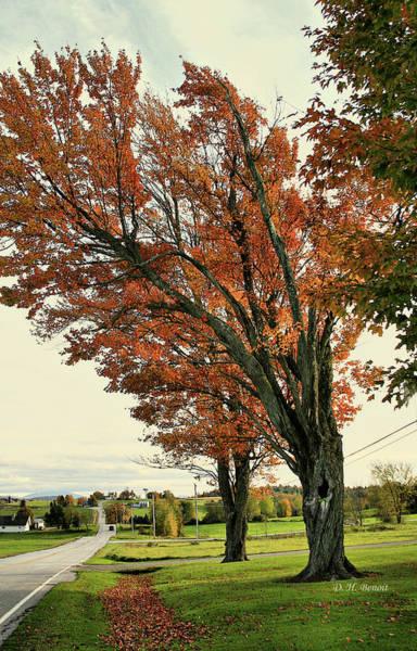 Photograph - Crooked Tree by Deborah Benoit